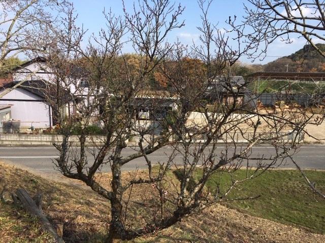 梅開花1.jpg