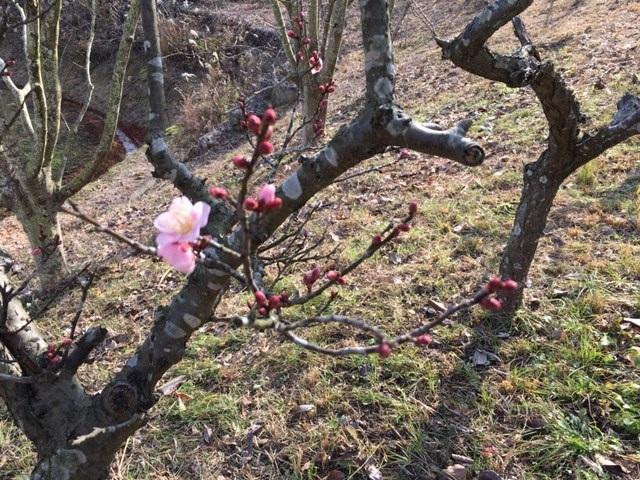 梅開花2.jpg